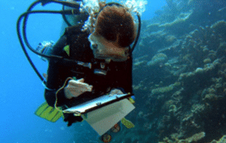 Reef Check Trains Divers