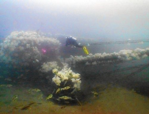 A.C.E. Becomes Southern California's Newest Dive Site