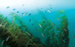 San Clemente's Wheeler North Reef with Fish